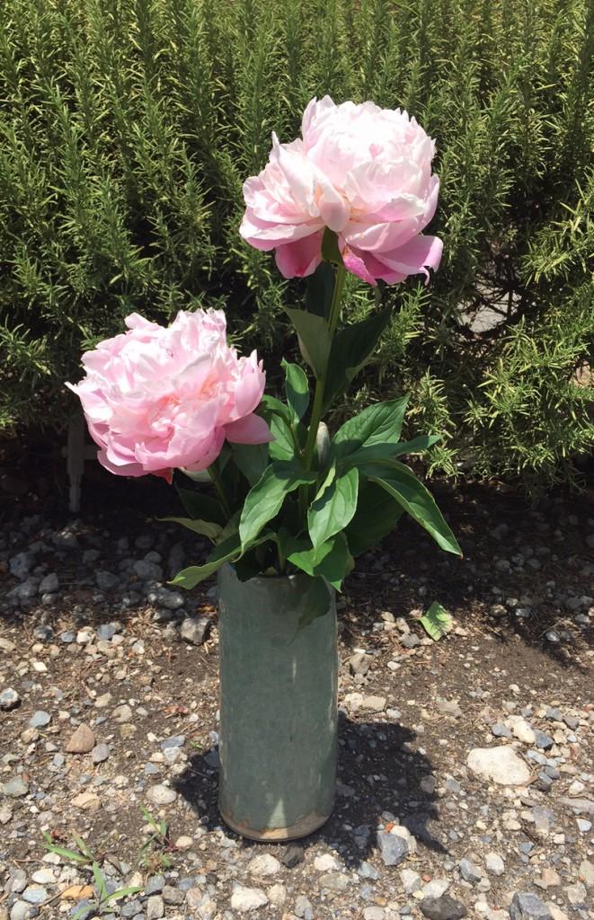 お花を美しく生けてくださる奉仕者に感謝です。