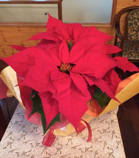 2016年12月25日(日)「クリスマスの喜び」
