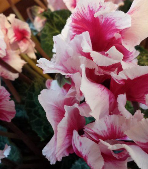 2017年2月5日(日) 「種を蒔く者の幸い」